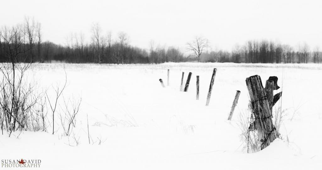 Fence-1024x543.jpg