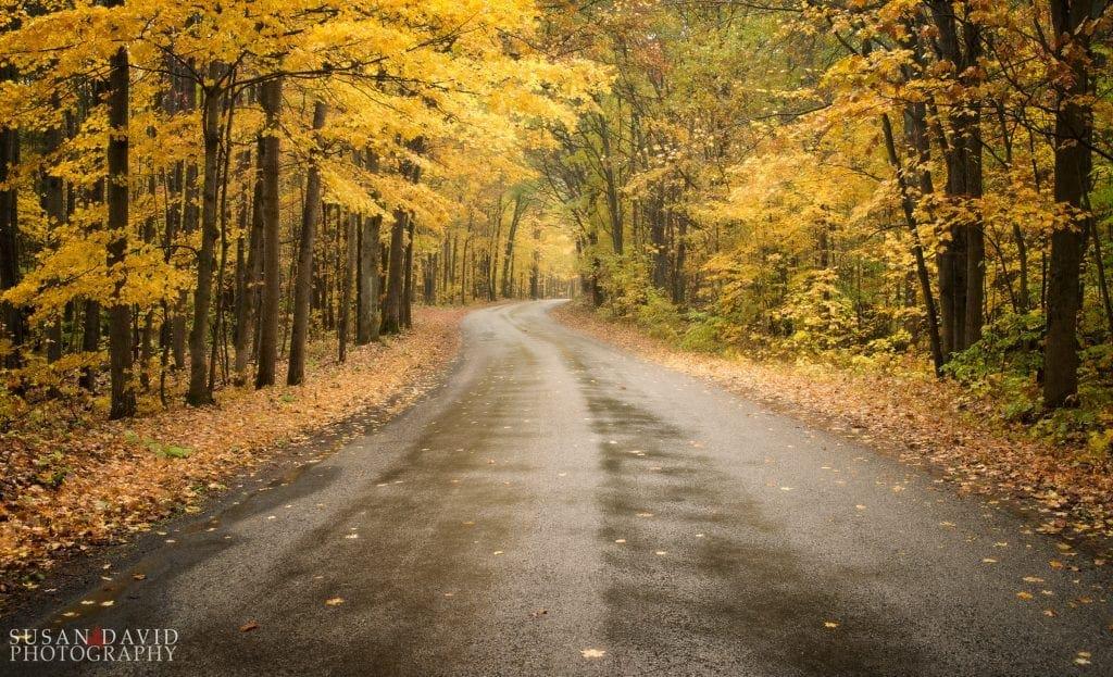 Awenda's Autumn Road