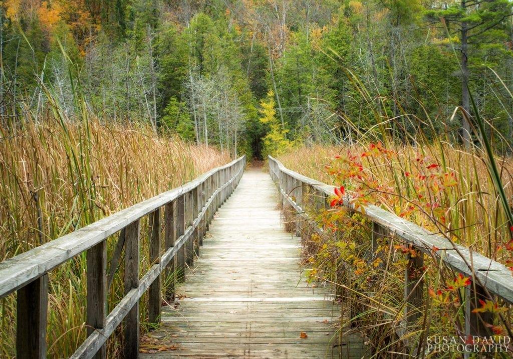 Kettle Lake Boardwalk