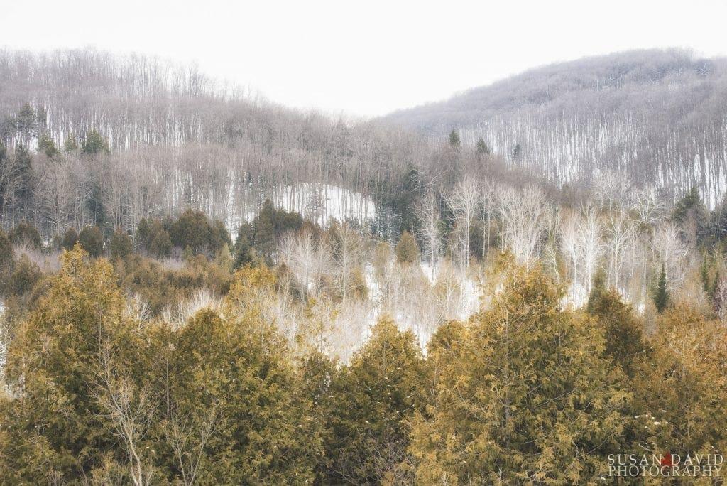 Cuckoo Valley