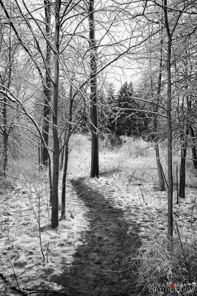 Icy-Trail-684x1024.jpg