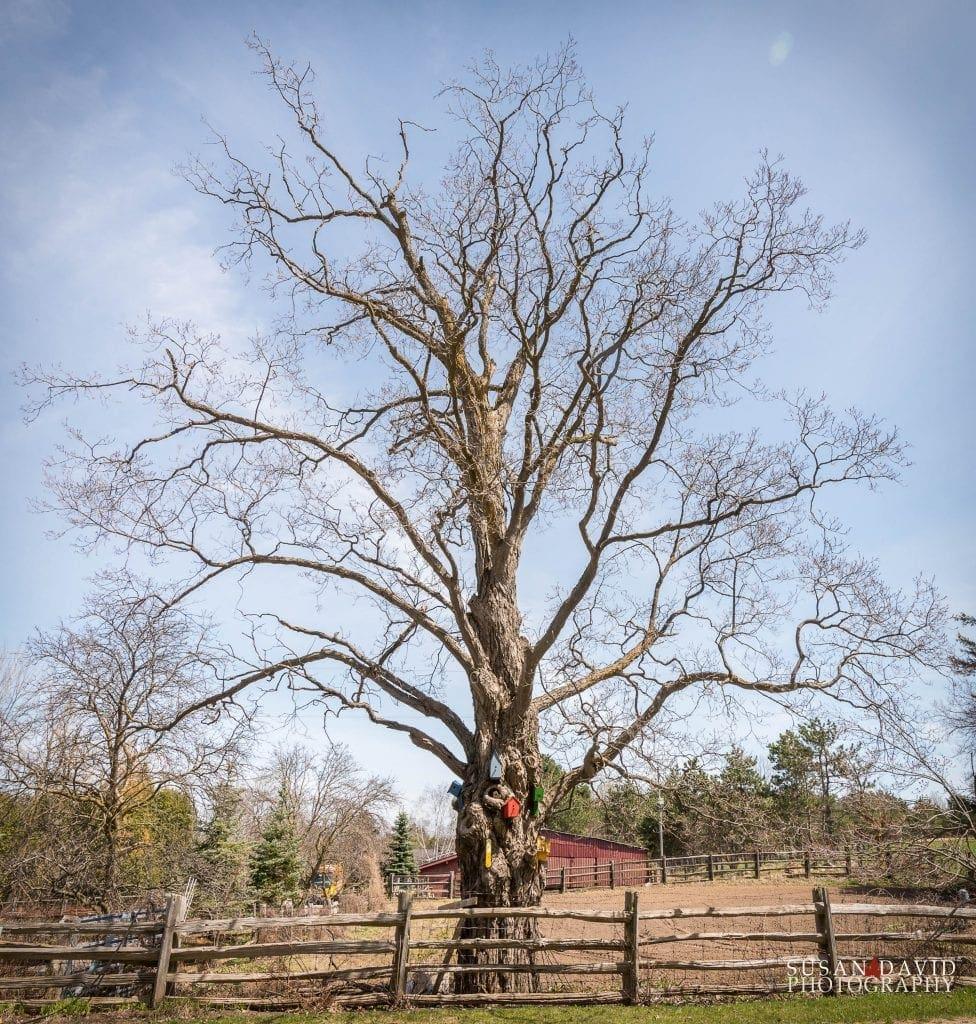 Treehouse-976x1024.jpg