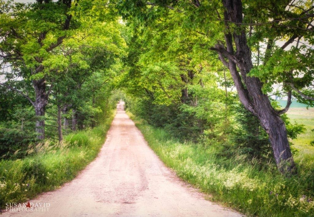 Walk-Down-My-Path-1024x708.jpg