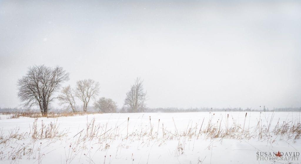 Snowy-Drive-Home-1024x558.jpg