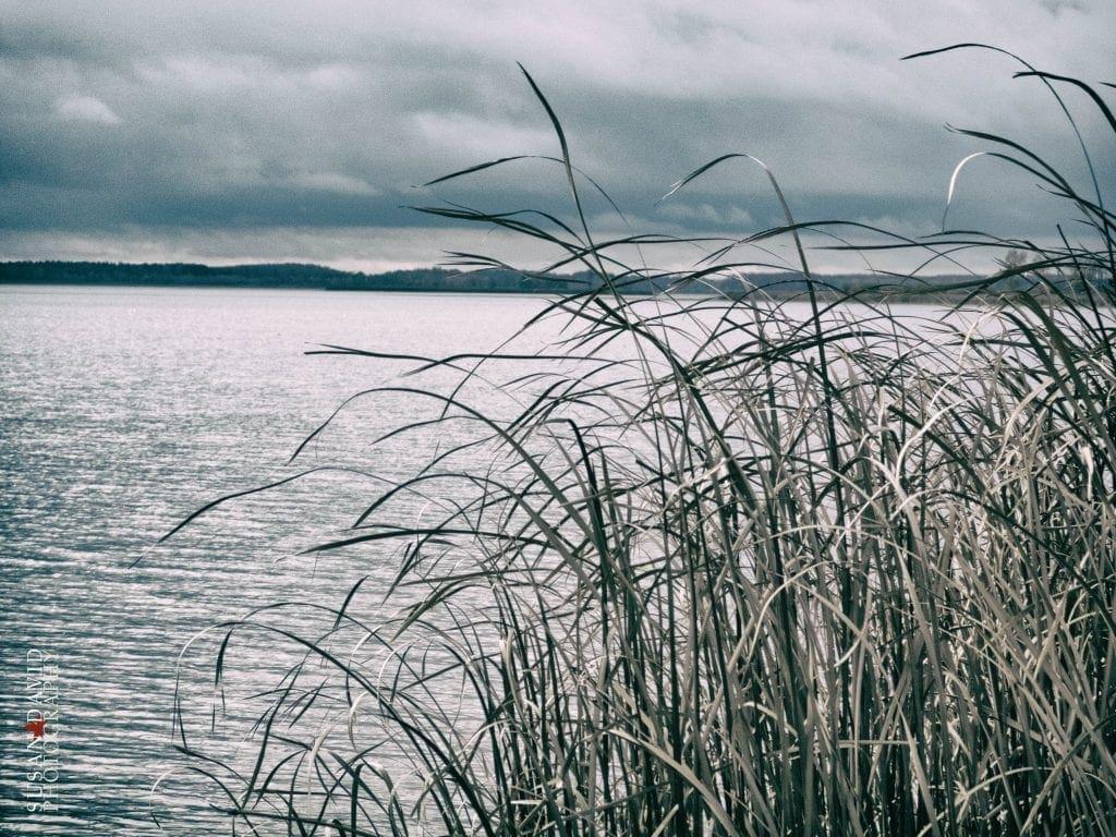 Reeds-in-the-Wind-1024x768.jpg