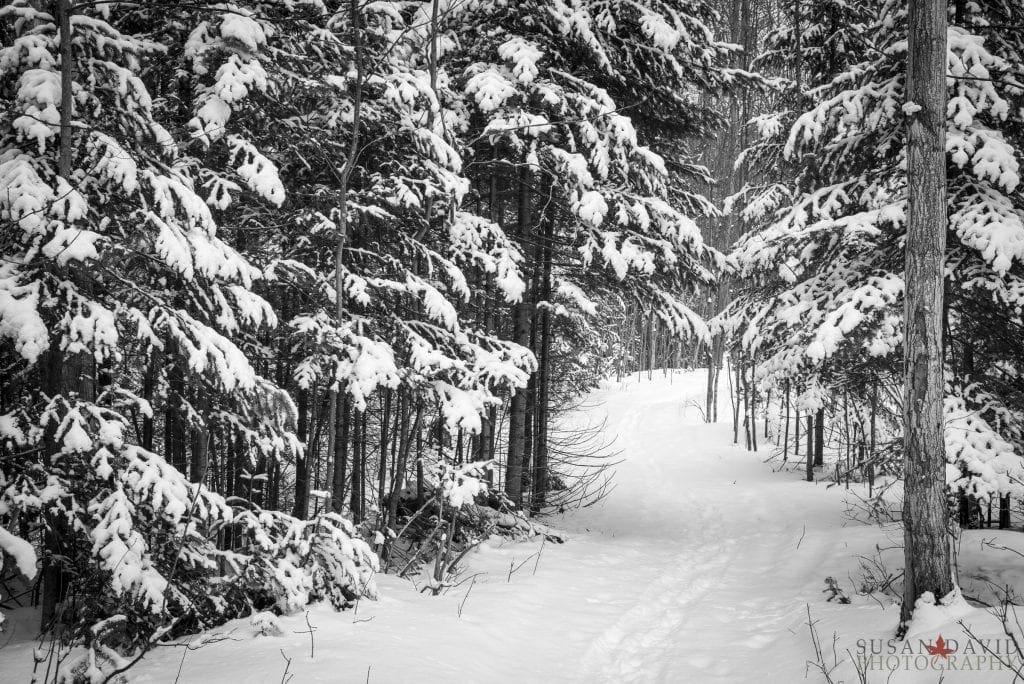 Snowy-Trail-1024x684.jpg