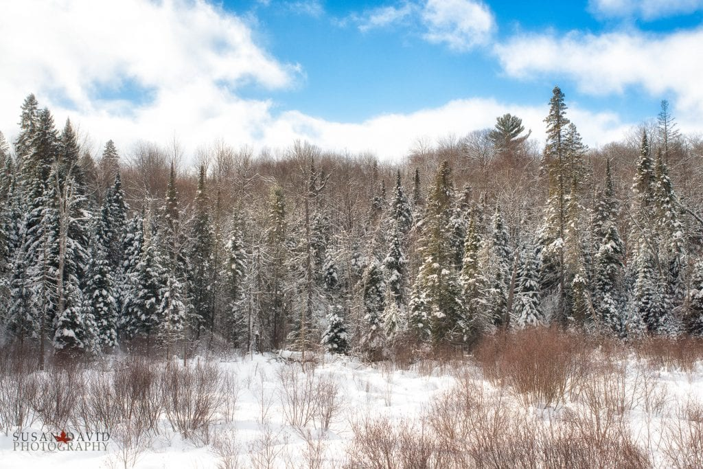 Snow-Dusted-Edit-1024x683.jpg