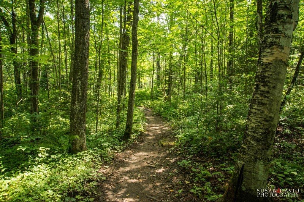 Bon Echo Creek Trail