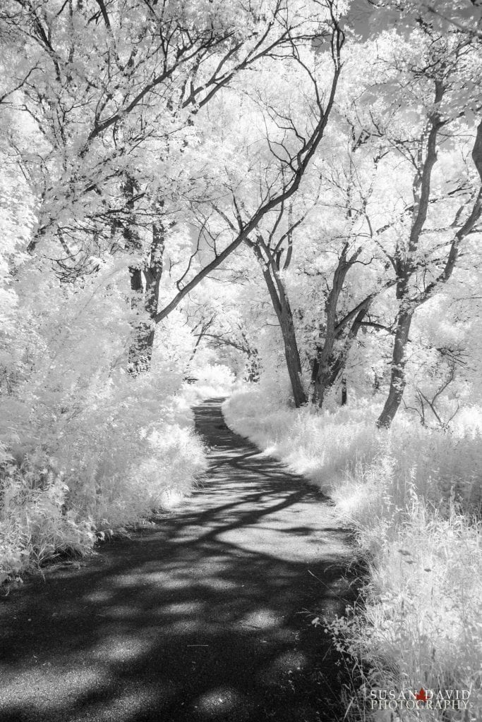 Humber River InfraRed