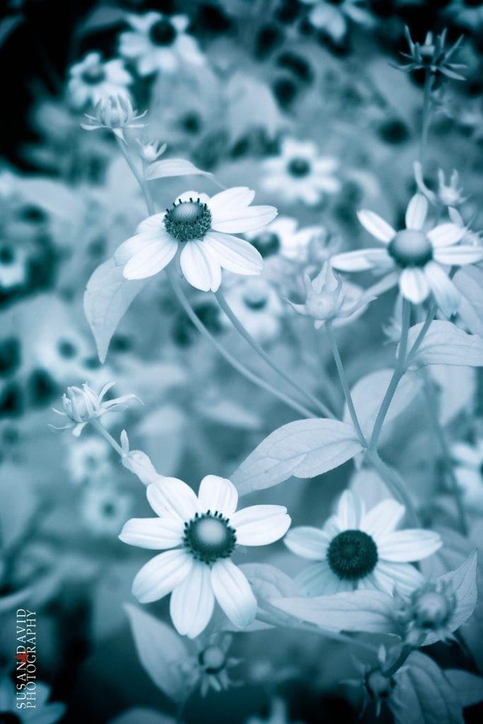 Blue-Flowers-683x1024.jpg