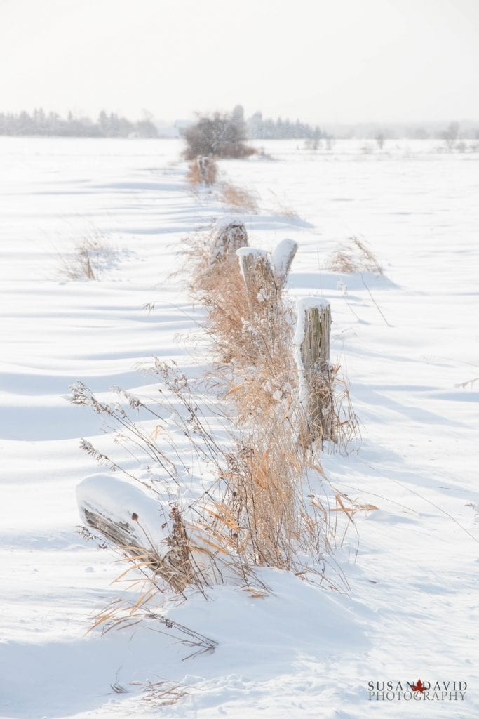 Snow-Covered-Fence-683x1024.jpg
