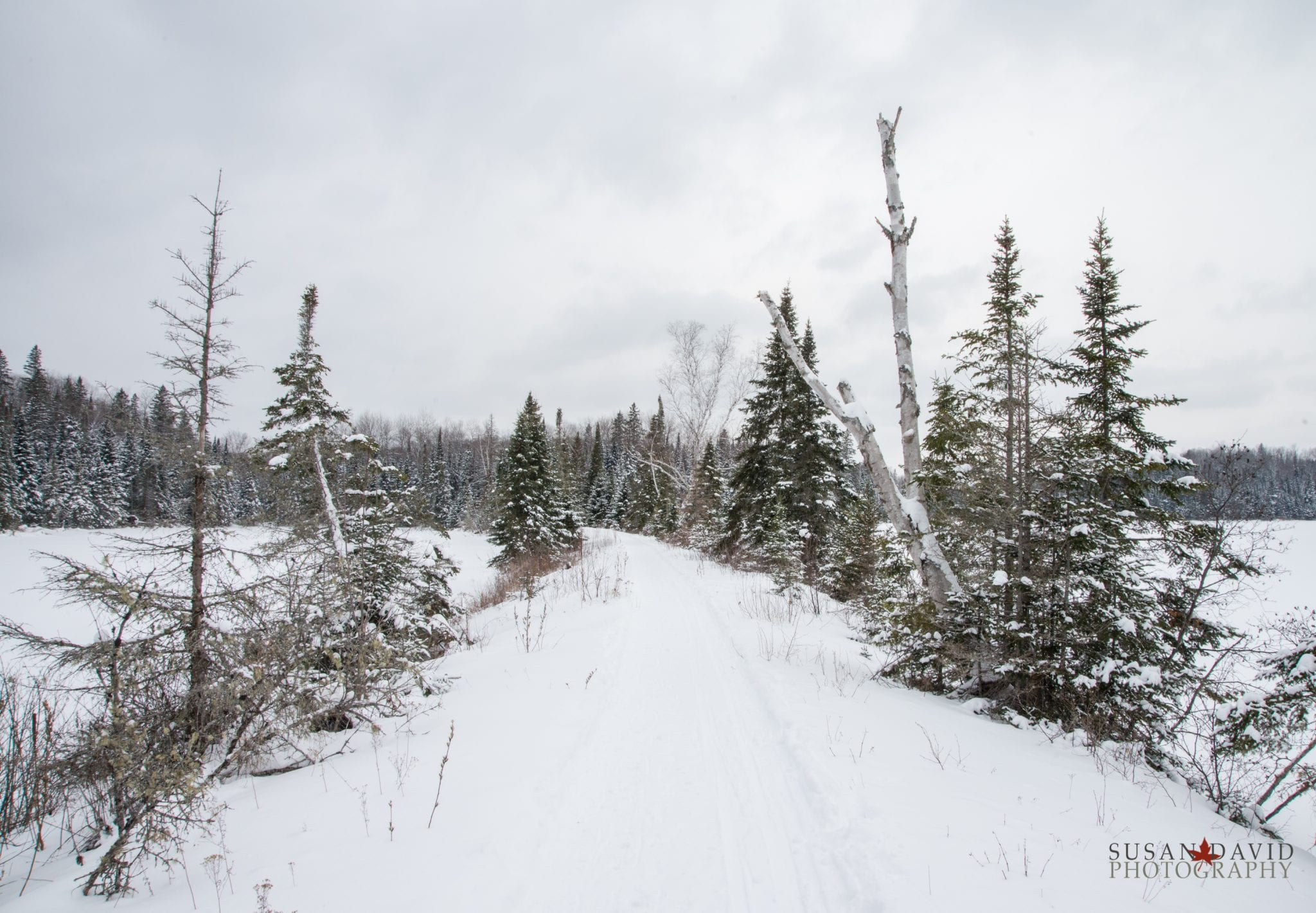 A Path to Algonquin