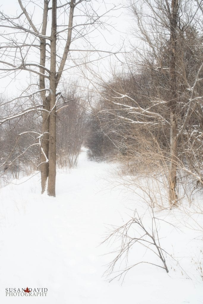 Winter-Trail-683x1024.jpg
