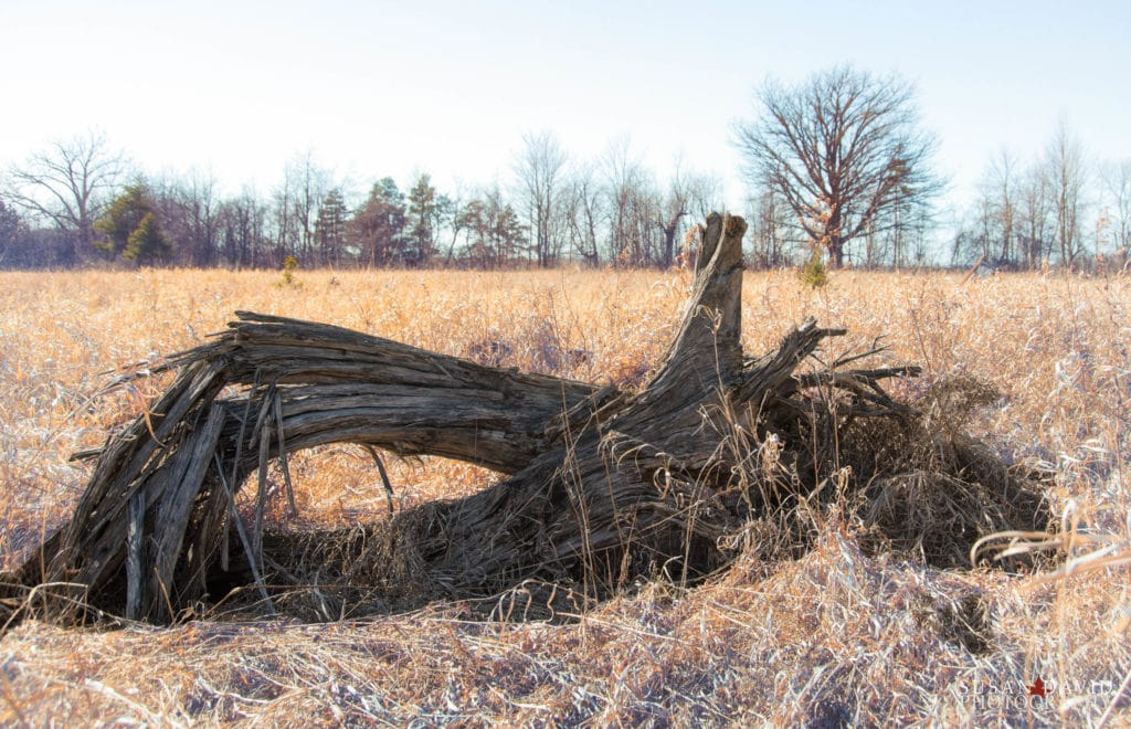 Tree-Stump-1024x660.jpg