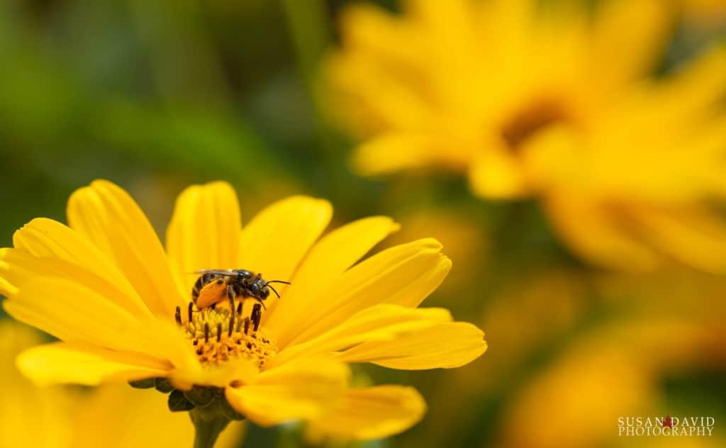 Pollenator-1024x632.jpg