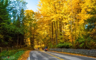 Country Roads in Autumn