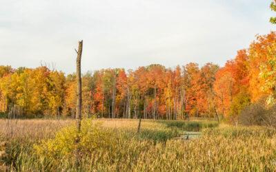Autumn in Claireville
