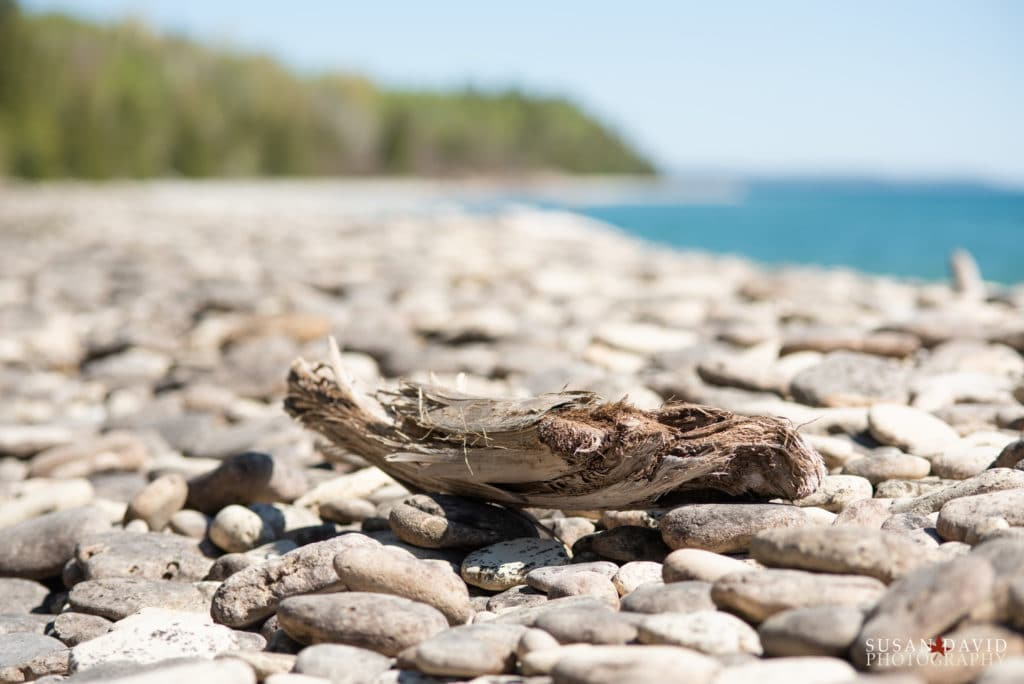 Driftwood on the rocky shoreline.