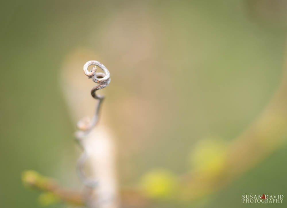 Twirly