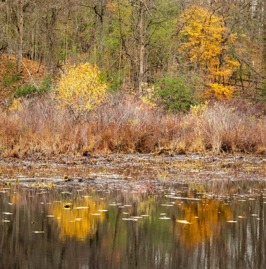 Coloured Reflections