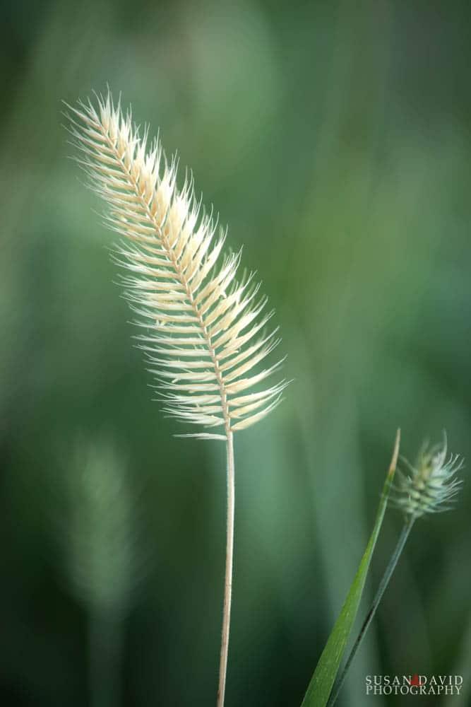 Ephram Flower