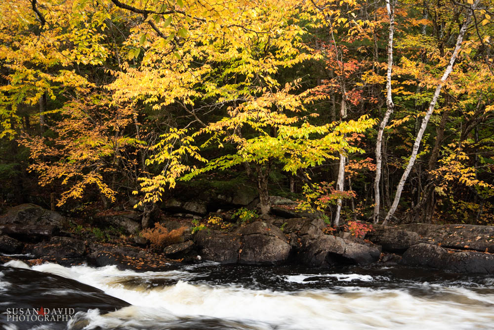 Oxtongue River