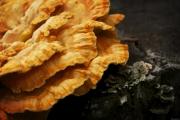 Chicken_Mushroom