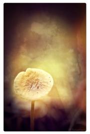 Lone_Mushroom