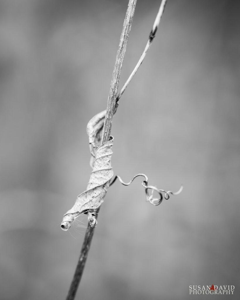 Leaf in BW